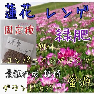 蓮花 レンゲ 緑肥 固定種 野菜の種 ハーブの種 家庭菜園 自然農 草マルチ(野菜)