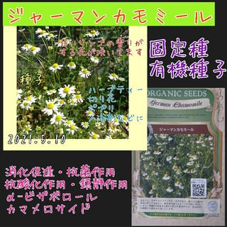 ジャーマンカモミール 固定種 家庭菜園 水耕栽培 野菜の種 ハーブの種 種 種子(野菜)