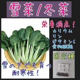 雪菜 冬菜 固定種 在来種 野菜の種 家庭菜園 種子 種(野菜)