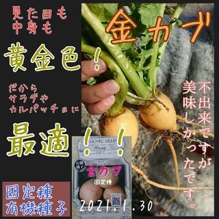 金カブ 固定種 在来種 有機種子 野菜の種 家庭菜園 種 種子(野菜)