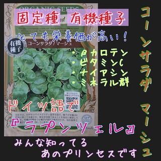 コーンサラダ マーシュ 固定種 有機種子 野菜の種 種子 種 ラプンツェル(野菜)