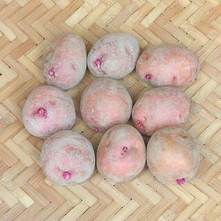 【現物】じゃがいも アンデスレッドの種芋 (土付 秋ジャガイモ用) 9個 19(その他)