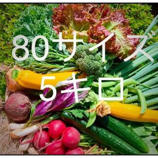 畑直送 無農薬栽培野菜(野菜)