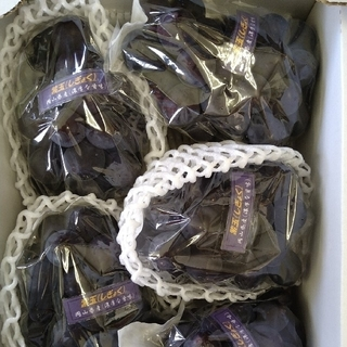 ⑤ブドウ 岡山県産 紫玉2k 1箱(5〜6房入)(フルーツ)