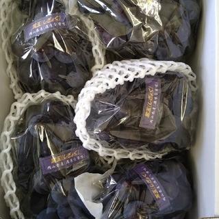 ⑧ブドウ 岡山県産 紫玉2k 1箱(5〜6房入)(フルーツ)