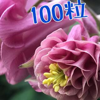 オダマキ タワーピンク100粒(その他)