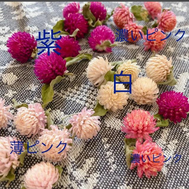 千日紅 ドライフラワー ハンドメイドのフラワー/ガーデン(ドライフラワー)の商品写真
