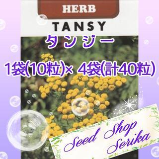 タンジー 家庭菜園 野菜 ハーブ 種(その他)