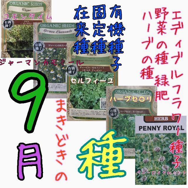 9月まきどきの種 固定種 在来種 有機種子 野菜の種 ハーブの種 緑肥 種子 種 食品/飲料/酒の食品(野菜)の商品写真