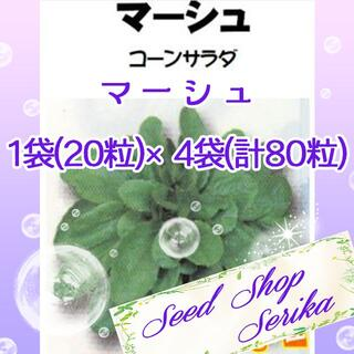 マーシュ 家庭菜園 野菜 ハーブ 種(その他)