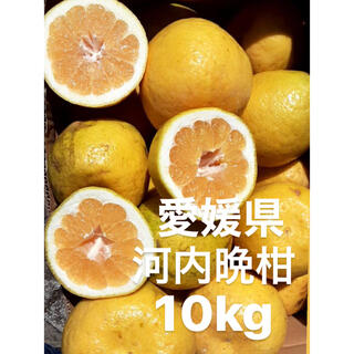 愛媛県 宇和ゴールド 河内晩柑 10kg(フルーツ)
