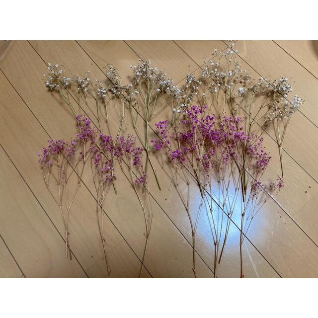 花材 かすみ草 ドライフラワー ハンドメイドのフラワー/ガーデン(ドライフラワー)の商品写真