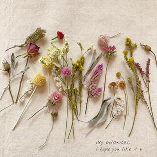 dry botanical /  #12 ドライフラワー 花材  ハンドメイド(ドライフラワー)