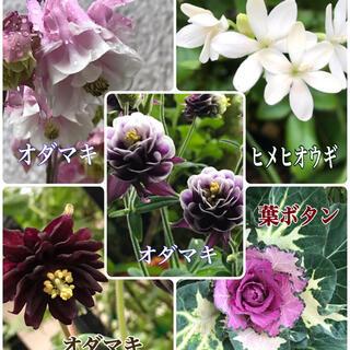 花種子 5品種セット(その他)