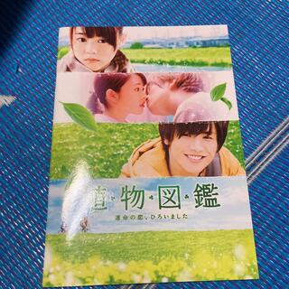 サンダイメジェイソウルブラザーズ(三代目 J Soul Brothers)の植物図鑑パンフレット(日本映画)