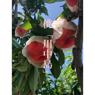★玉数バラバラ 川中島 5キロ箱(フルーツ)