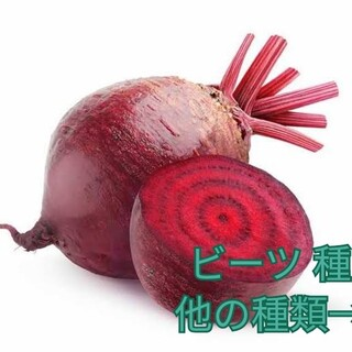 野菜種☆ビーツ☆変更→ほうれん草 芽キャベツ つるむらさき 春菊 チンゲン菜(野菜)