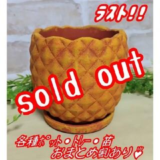 パイナップルポット(受皿付) 植木鉢 プランター 多肉植物 プレステラ プラ鉢(プランター)