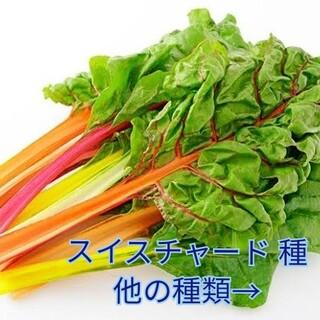 野菜種☆スイスチャード☆変更→芽キャベツ ほうれん草 パクチー わさび菜 ビーツ(野菜)