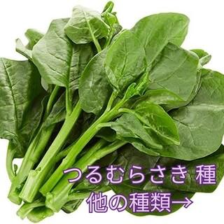 野菜種☆つるむらさき☆変更→京みずな つるなしいんげん ラディッシュ人参 ケール(野菜)