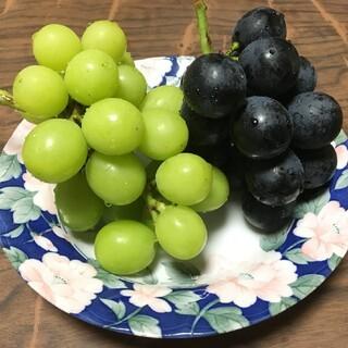 送料無料★ブランド高級品種ナガノパープル約2口家庭用(フルーツ)