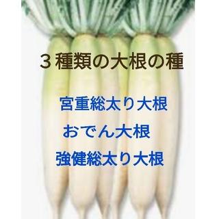 3種類の大根の種セット★ほうれん草の種30粒おまけです!(野菜)