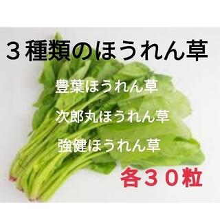 3種類のほうれん草★春菊の種30粒おまけします!(野菜)