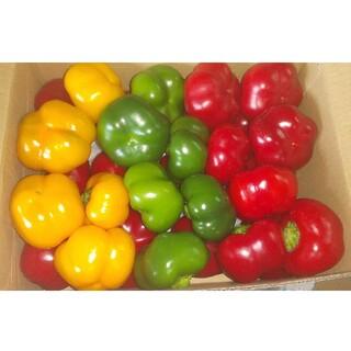 トマピー(フルーツパプリカ・セニョリータ)1.7~1.8キロ(野菜)