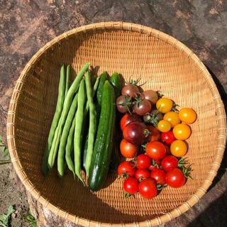 野菜セット きゅうり、いんげん、トマト コンパクト発送(野菜)