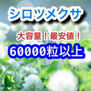 【最安値!説明書つき】ホワイトクローバー、シロツメクサの種 41g 6万粒以上(その他)