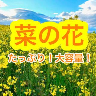 【最安値】菜の花 種 21g(大容量!6300粒以上!)【説明書つき】(その他)
