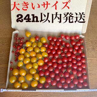 ミニトマト プチトマト サラダトマト 3種(野菜)