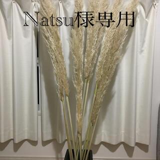 Natsu様専用 パンパスグラス10本(ドライフラワー)