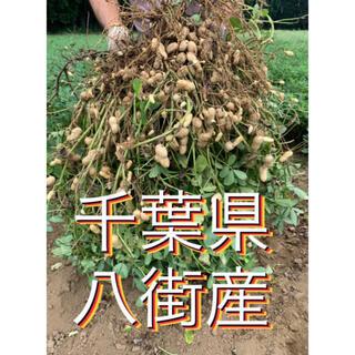 千葉県八街産おおまさり2キロ(梱包資材込み)(野菜)