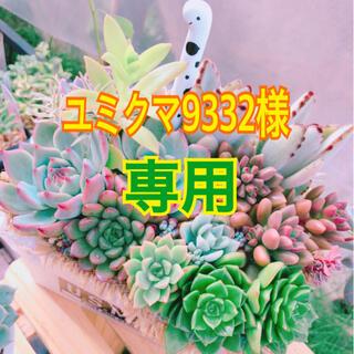 【ユミクマ9332様 専用🍒】(その他)