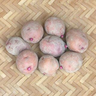 【現物】じゃがいも アンデスレッドの種芋 (土付 秋ジャガイモ用) 8個 24(その他)