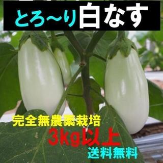トロ~り 白なす 白茄子 白ナス 3kg以上 完全無農薬(野菜)