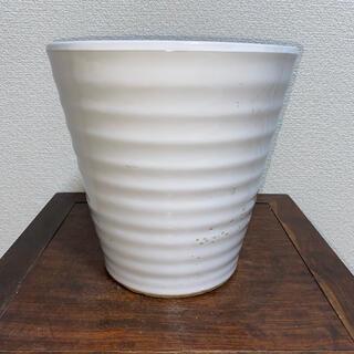 植木鉢 蘭鉢 白 丸鉢 鉢 盆栽鉢(その他)