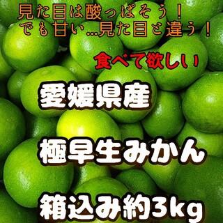 愛媛県産 極早生みかん 箱込み約3kg 柑橘 ミカン(フルーツ)