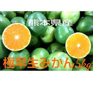熊本県産極早生みかん5kg(フルーツ)