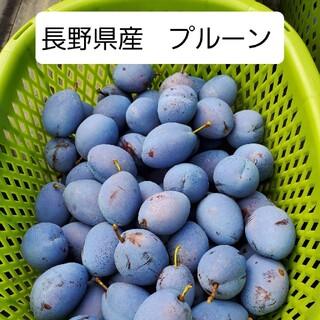 長野県産、生プルーン(倉島) 1kg(家庭用)(フルーツ)