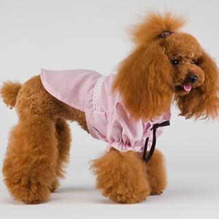 新品 リボン付きストライプシャツ 犬服 ペット服 チワワ トイプー(犬)