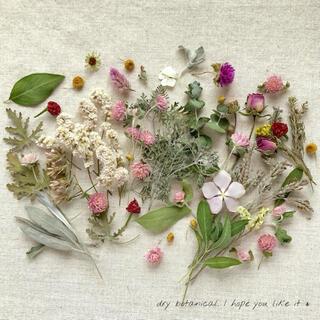 dry botanical /  #15 ドライフラワー 花材  ハンドメイド(ドライフラワー)