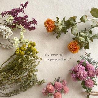 dry botanical /  #14 ドライフラワー 花材  ハンドメイド(ドライフラワー)