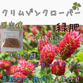 クリムゾンクローバー 緑肥 固定種 家庭菜園 種子 種 グランドカバー(野菜)