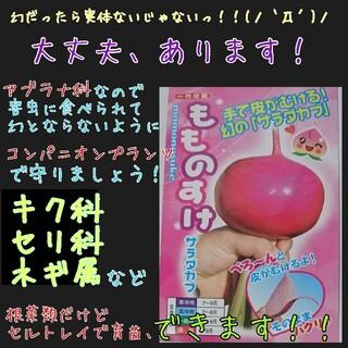 yutanpo様専用(野菜)