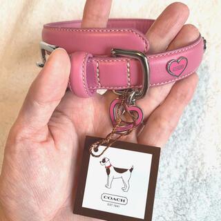 コーチ(COACH)のコーチ 小型犬用首輪(リード/首輪)