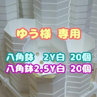 プラ八角鉢 カネヤ【2.5Y】20個 多肉植物 プレステラ(プランター)