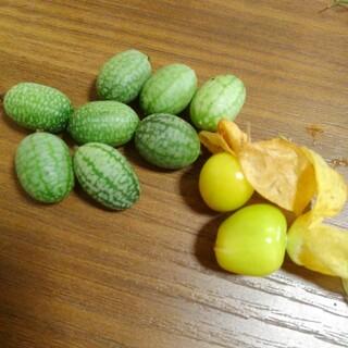 マイクロきゅうり種➕食べれるほおずき種 たねの出品です(野菜)