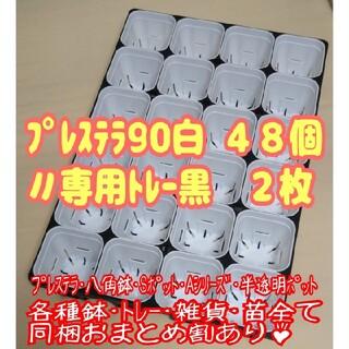 【スリット鉢】プレステラ90白48個+専用システムトレー黒2枚 プラ鉢 多肉植物(プランター)